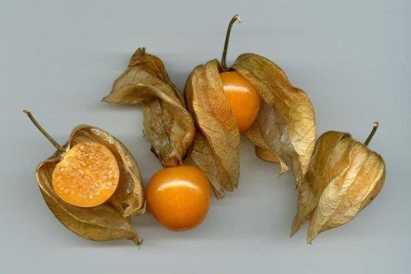 فراوری و پرورش میوه های جدید در شهرستان بوشهر گسترش می یابد