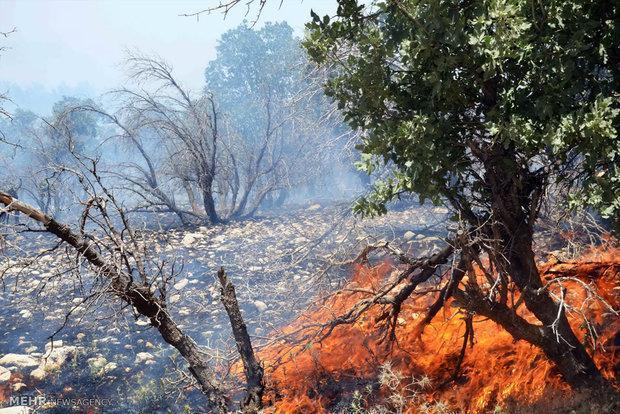 ردپای اختلافات عشایر در آتش سوزی های سریالی جنگل های ناودار