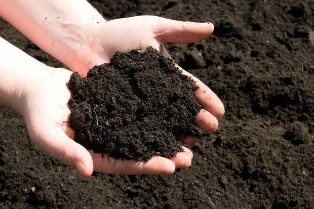 افزایش 10 تا 20 درصدی محصولات کشاورزی با کودهای زیستی