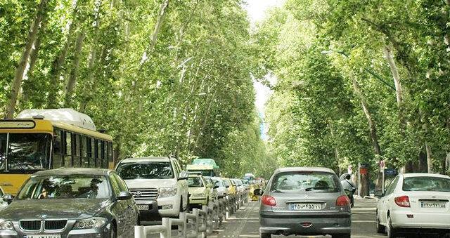 درختان عامل تشدید آلودگی هوا در محیط های شهری