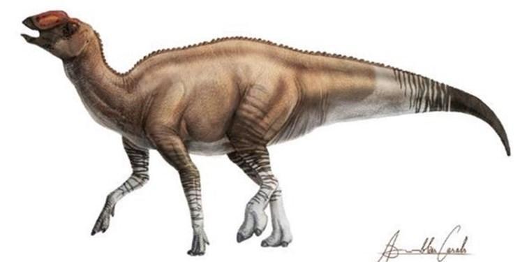 کشف استخوان های صدمیلیون ساله بچه دایناسور