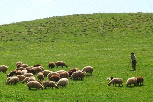 نوسانات قیمت؛ علت اصلی فعالیت سنتی دامداران عشایر خراسان شمالی