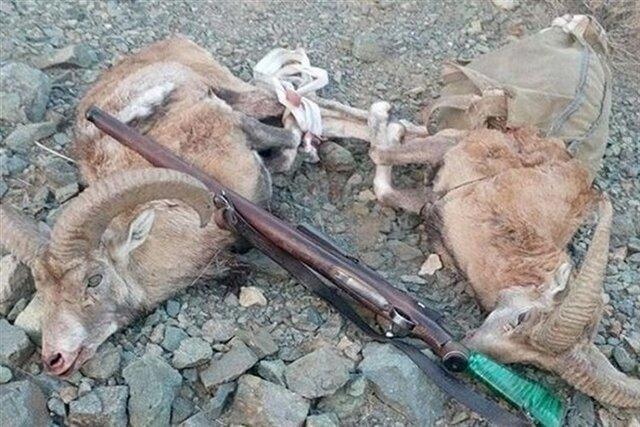 افزایش جریمه، شکار غیرمجاز حیات وحش خراسان شمالی را کاهش می دهد