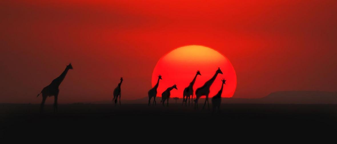 کنیا؛ سرزمین حیات وحش آفریقا
