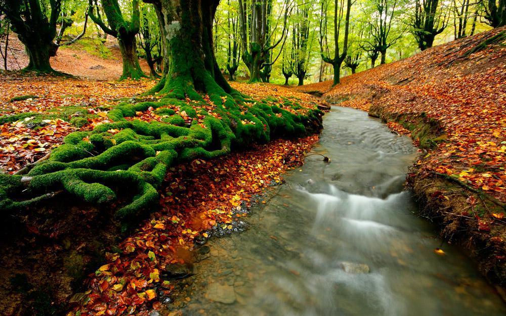 جنگلهای اسرارآمیز پارک طبیعی Gorbea در باسک اسپانیا