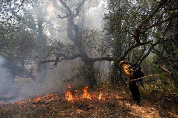جنگل های اروپا هم طعمه حریق شدند
