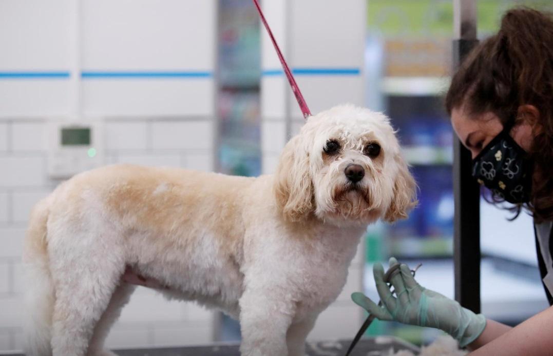 پس از برگزیت؛ گذرنامه اروپایی حیوانات خانگی بریتانیا لغو می&zwnjشود