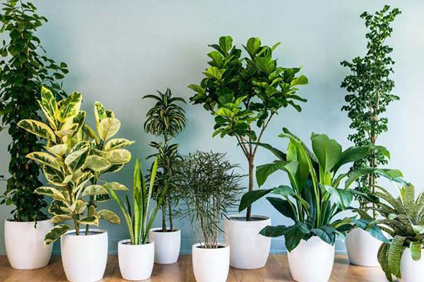 معرفی 10 گیاه تصفیه کننده هوا و زینتی برای منزل