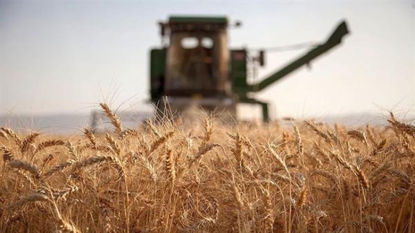 تعرفه ترجیحی روسیه برای صادرات 17.5 میلیون تن گندم و جو به این کشور