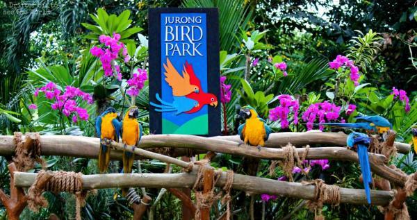 باغ پرندگان جورونگ (سنگاپور)