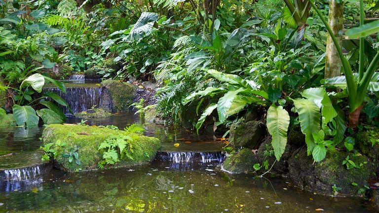 باغ گرمسیری اسپایس پنانگ